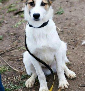 Собака полросток Арго 5-6 месяцев-даром
