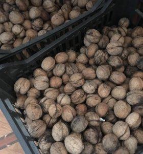 Продаются грецкие орехи