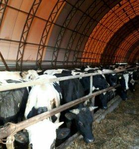 Картофель мелкий для корма скота