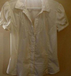 Блузка zolla размер м