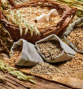 зерно,комбикорма