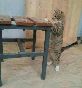 Котята привиты доставим даром