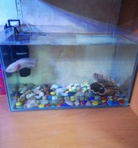 Аксолотль + аквариум на 20 л