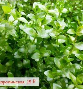 Растения из Салавата