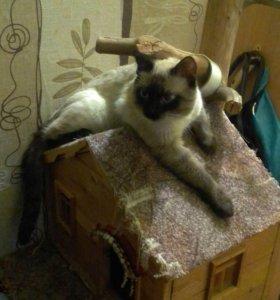Продам тайских котят.