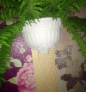 Декоративный папоротник (цветы)