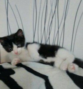 Котик 1.5 месяца