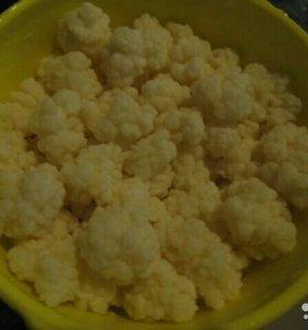 Чайный гриб, кефирный тибетский гриб