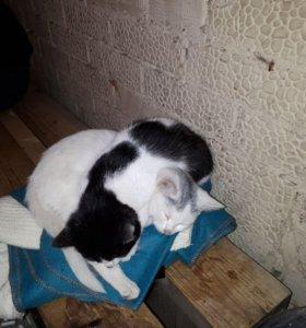 Милые котята!!!