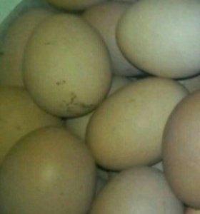 Яйцо и мясо кролика
