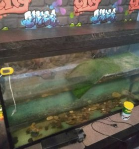 Черепахи и аквариум 200л