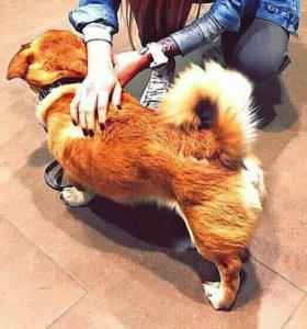 Собака Тоша, возраст 6-7 лет, даром!!!