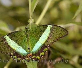 Яркие Живые Бабочки из ЮАР Жаркий закат