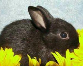Декоративный кролик и клетка