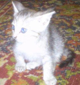 Котенок- девочка