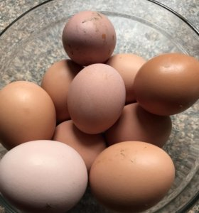 Куриные домашние яйца 10 шт.- 100р.