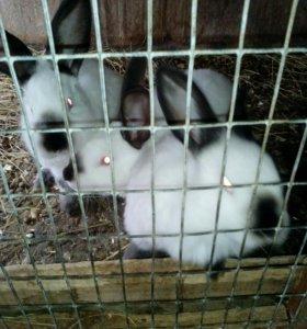 Продаются кролики разных пород и возрастов.