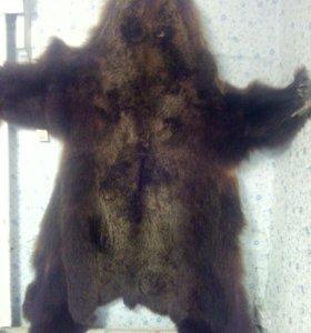 Шкура бурого медведя выделанная