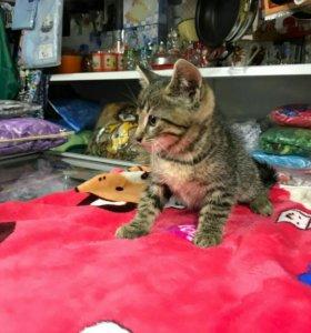 Котенок 1,5 месяца отдам в хорошие руки
