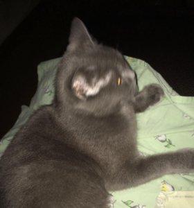 Отдам котят( котята родились недавно )