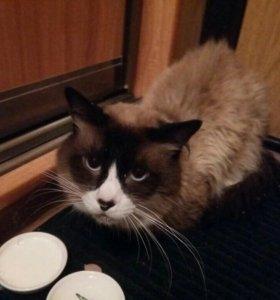 Купить кота в петропавловске