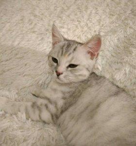 Котёнок 3 месяца девочка приучина к лотку активная