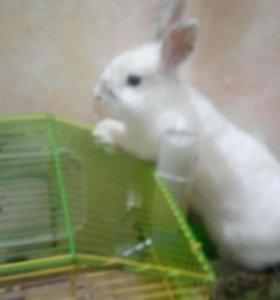 Ласковый и нежный зверь. Кролик