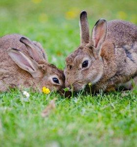 Продам крола или обменяю!