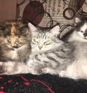Отдадим котят в добрые руки. Рождённые 13 октября.