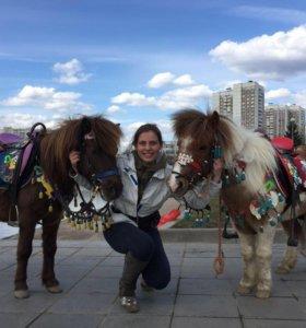 Лошади и пони на праздники