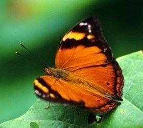 Яркие Живые Бабочки из Таиланда
