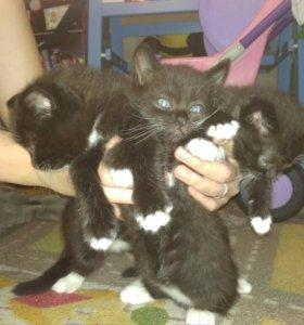 Три кота и одна кошечка