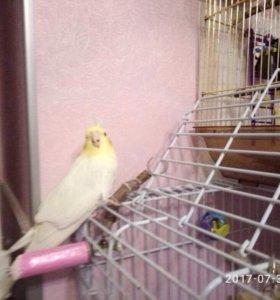 Примем в дар попугая