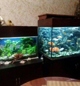 Аквариумы с рыбами,растениями,тумбами,светом