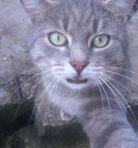 Модный селфи-котик в добрые руки