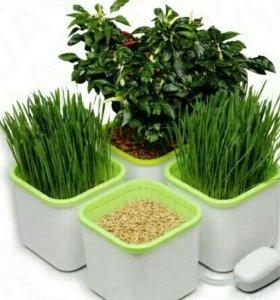 Проращиватель семян и зерен 4-х модульный