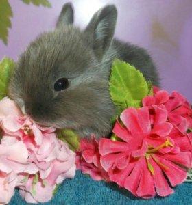 Крольчата карликовые. Очаровашки. 15 заек