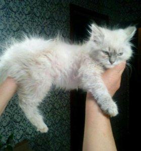 Красивая кошка в заботливые руки