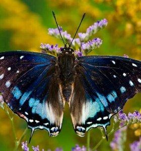 Тропические бабочки у вас дома