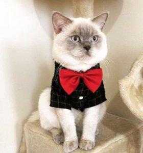 Вязка с клубным котом