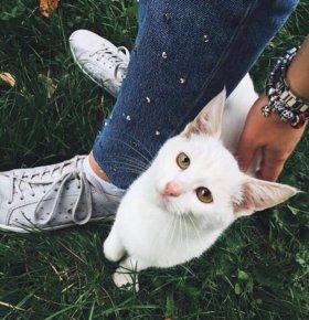 Белый котёнок.