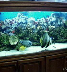 Изготовление аквариума