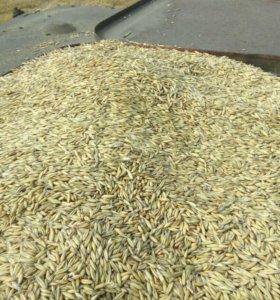 Продам зерно 4 центнера комбикорм 6 центнеров