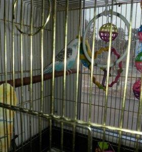 Попугайчик-девочка
