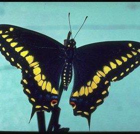 Яркие Живые Бабочки из Южной Америки