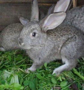 кролики разных возрастов и расцветок