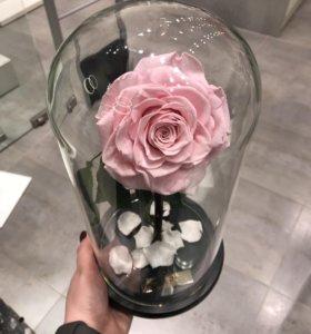 Розы в колбе (живые)