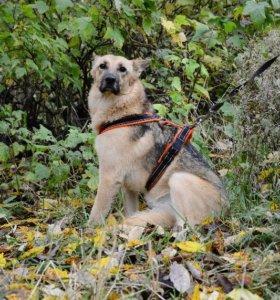 В дар добрым людям замечательная собака Бемби