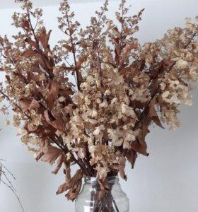 Гортензия сухоцвет