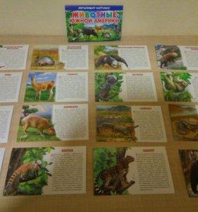 Обучающие карточки Животные Америки